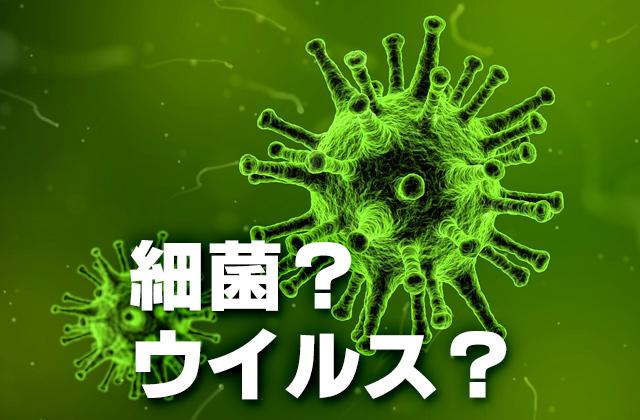細菌?ウィルス?