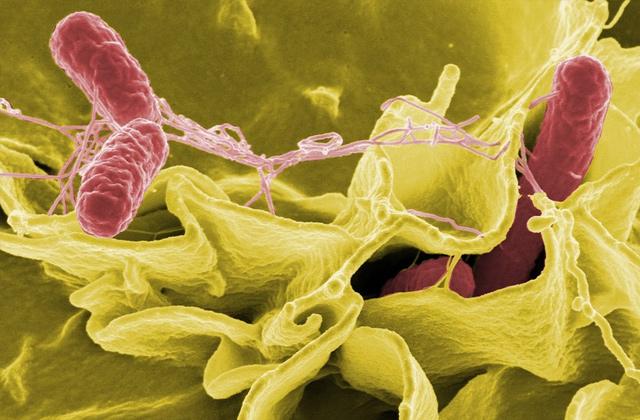 バクテリア