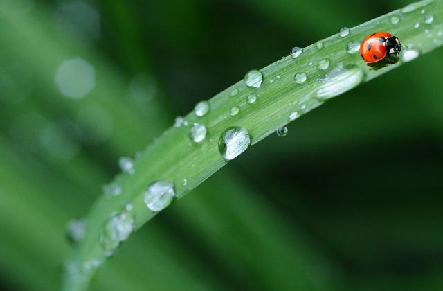 梅雨の季節の一面